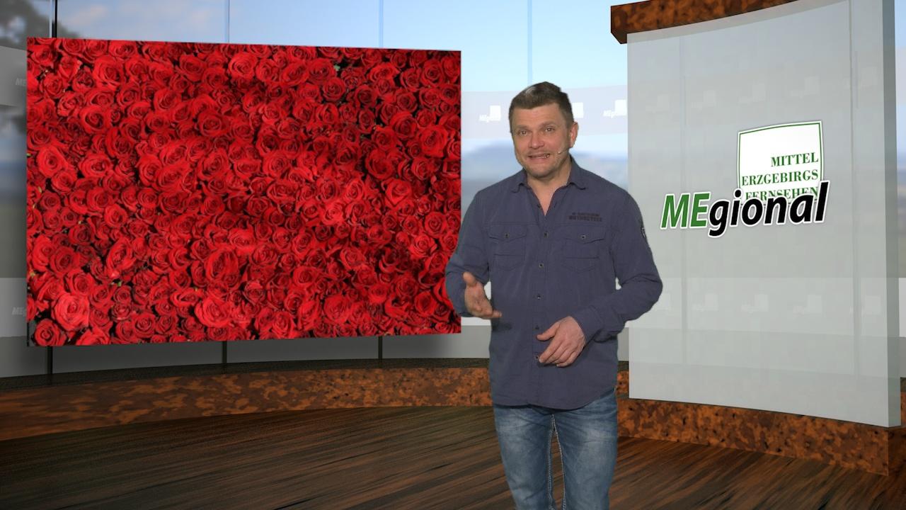 MEgional mit Informationen zum Blumenhandel in Sachsen
